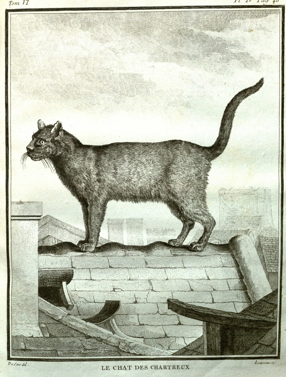 Cats: The Soft Underbelly of the Enlightenment – Journal18