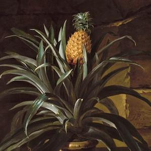 Ananamania: l'ananas dans les toiles peintes au 18e siècle – par Aziza Gril-Mariotte