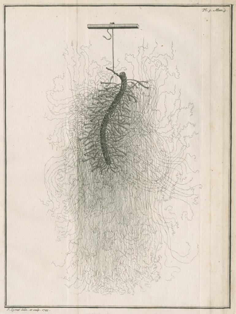 Fig. 1. Pierre Lyonet, Plate 9 from Abraham Trembley, Mémoires pour servir à l'histoire d'un genre de polype d'eau douce (Leiden, 1743), etching and engraving. © Royal Society.