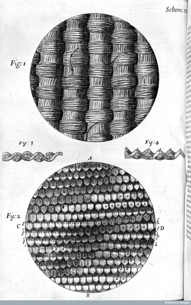 Fig. 2. Schem. III from Robert Hooke, Micrographia (London, 1665), engraving. © Wellcome Library, London. Credit: Wellcome Library, London. Wellcome Images images@wellcome.ac.uk http://wellcomeimages.org Robert Hooke, Micrographia, silks. Micrographia Robert Hooke Published: 1665 Copyrighted work available under Creative Commons Attribution only licence CC BY 4.0 http://creativecommons.org/licenses/by/4.0/