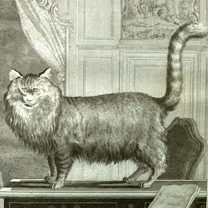 Cats: The Soft Underbelly of the Enlightenment