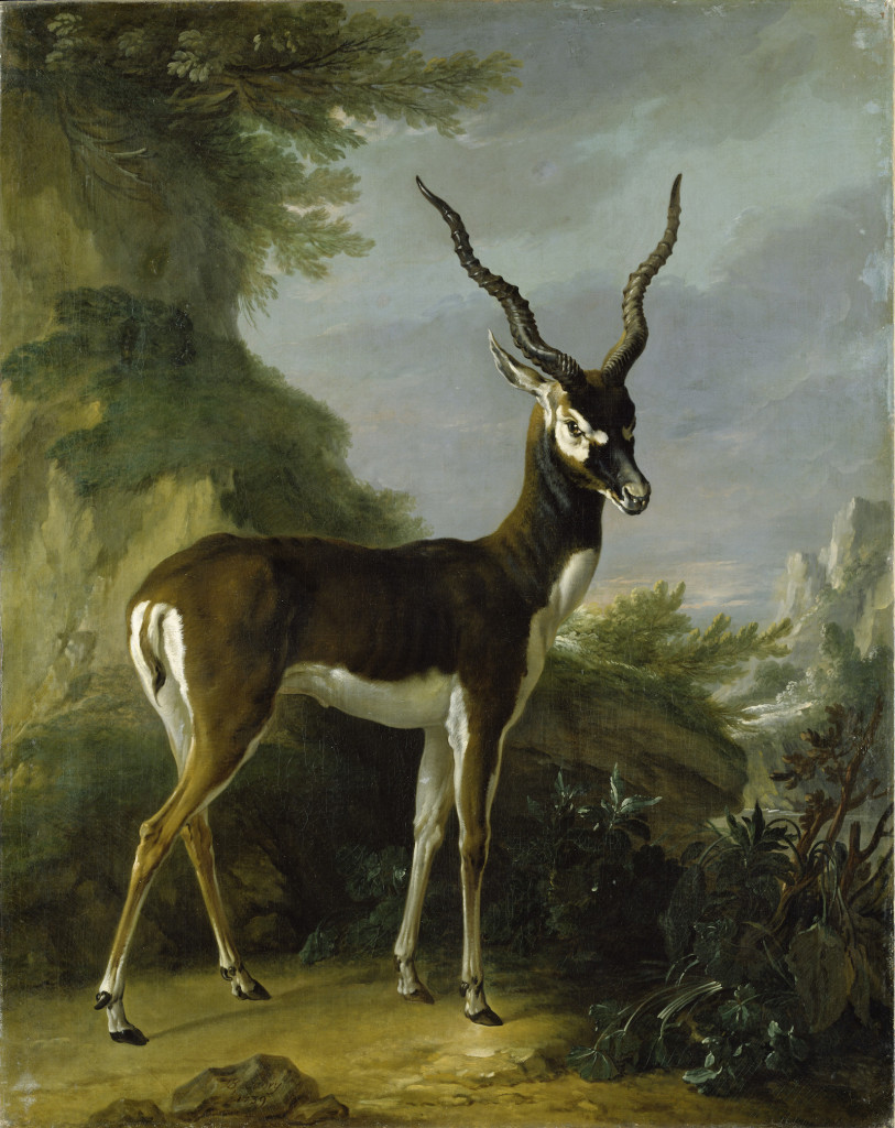Fig. 13. Jean-Baptiste Oudry (and studio?), Indian Blackbuck, oil on canvas, 1739. Staatliches Museum, Schwerin. Image: © Staatliches Museum Schwerin.